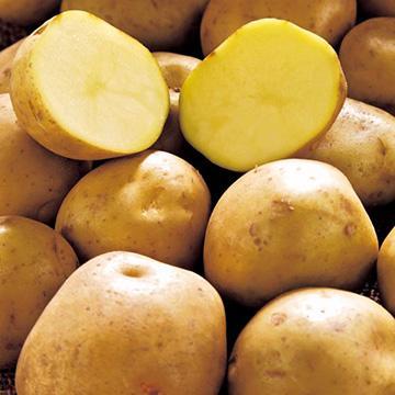 無料 9月出荷予定 出島 デジマ じゃがいも種芋 10kg サイズ混合 秋じゃが芋種芋 秋ジャガイモ種芋 馬鈴薯種芋 検疫合格済 栽培用 ばれいしょ種芋 海外並行輸入正規品