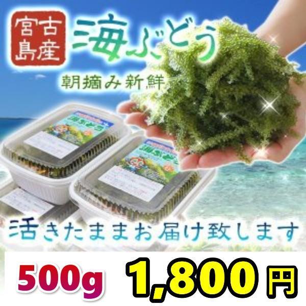 宮古島産(生)海ぶどう 500g 茎つき(250g×2パック)タレ4袋付