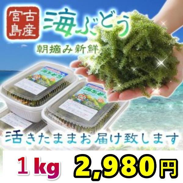 宮古島産(生)海ぶどう1キロ 茎つき(250g×4パック)タレ8袋付