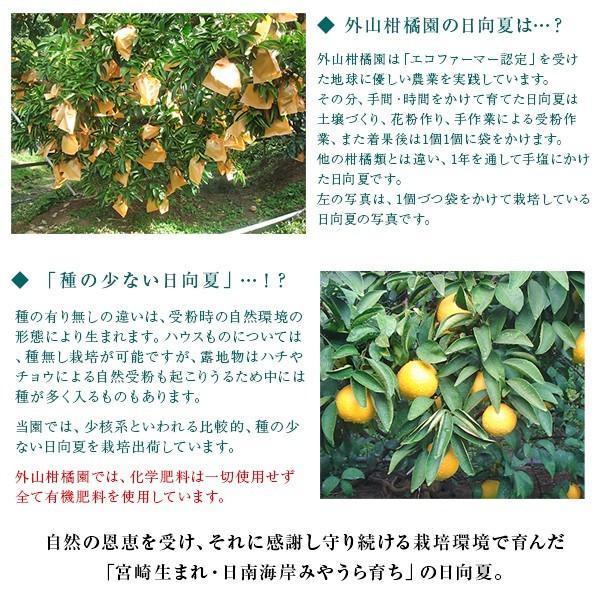 日向夏L玉5kg(26玉〜29玉)ギフト 宮崎県日南海岸宮浦産 外山柑橘園 miyaura-ponkan 05