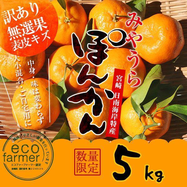 早期予約 訳あり みやうらポンカン5kg 12/10頃から順次出荷 宮崎県日南海岸宮浦産 外山柑橘園|miyaura-ponkan