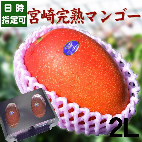 宮崎完熟マンゴー 8月上旬頃までの発送となります 宮崎産 完熟 極上 朝採れ 送料無料 贈答 フルーツ ギフト 秀品-通常玉(青秀) 大サイズ×2玉 ランキング