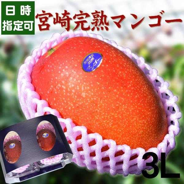 宮崎完熟マンゴー 8月上旬頃までの発送となります 宮崎産 完熟 極上 朝採れ 送料無料 贈答 フルーツ ギフト 秀品-通常玉(青秀) 特大サイズ×2玉 ランキング