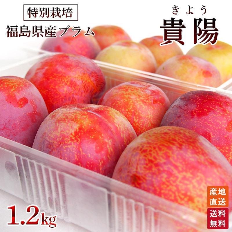 送料無料新品 福島県産プラム貴陽約1.5kg 送料無料 世界の人気ブランド クール便 特別栽培 減農薬