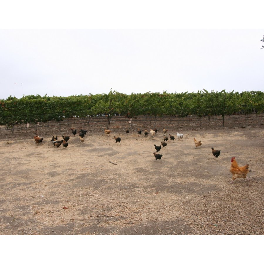 白 ワイン アンぺロス セラーズ ヴィオニエ サンタバーバラカウンティ Ampelos 2017 SB County Viognier(アメリカ カリフォルニア)wine|moesfinewines|05