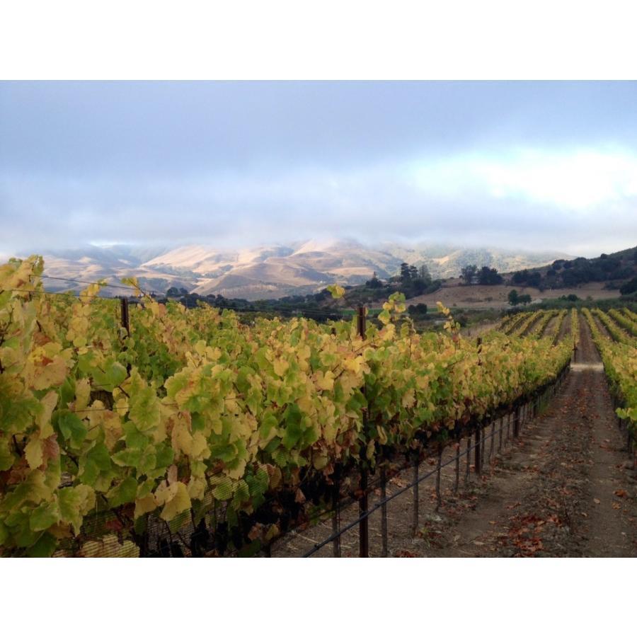赤 ワイン アンぺロス セラーズ ピノ・ノワール サンタ・リタ・ヒルズ 2016 Pinot Noir オーガニック アメリカ カリフォルニアワイン 自然派ワイン wine|moesfinewines|04