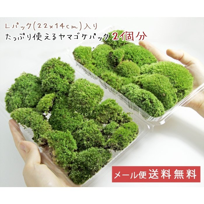メール便送料無料 訳あり ヤマゴケ詰め合わせ2パック分 日本メーカー新品 お気に入