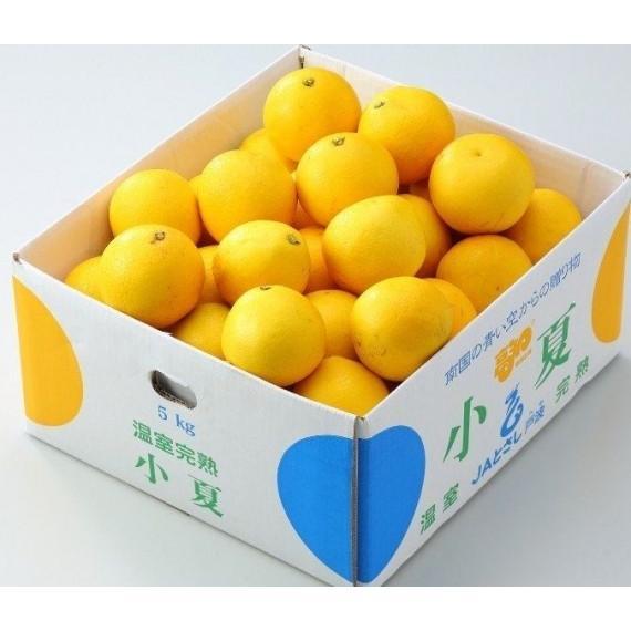 みかん 小夏 ニューサマーオレンジ L〜2L 約5kg 高知産 新品 贈答ギフト 超安い 南国の太陽を浴びて育った甘くて新鮮な柑橘 まっこと旨い