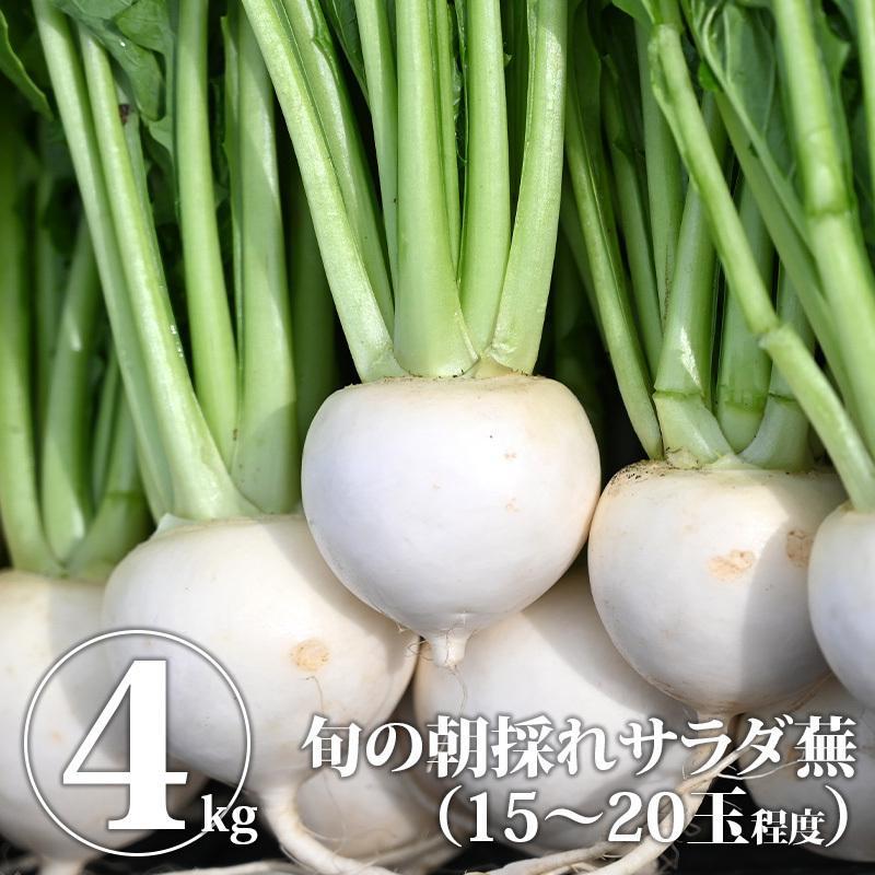 送料無料 在庫限り サラダ蕪 4kg かぶ WS 松本農園 ふるさと割 カブ