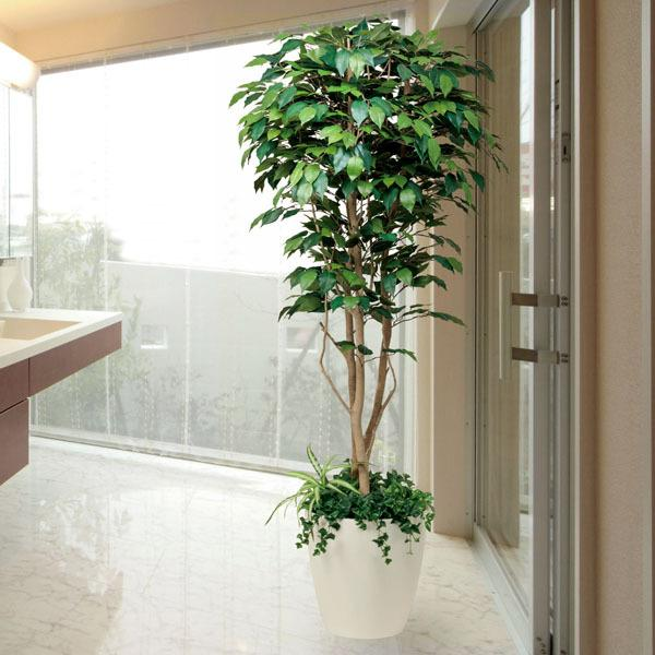 光触媒観葉植物(人工観葉植物) 光の楽園 フィカスベンジャミン1.8m植栽付