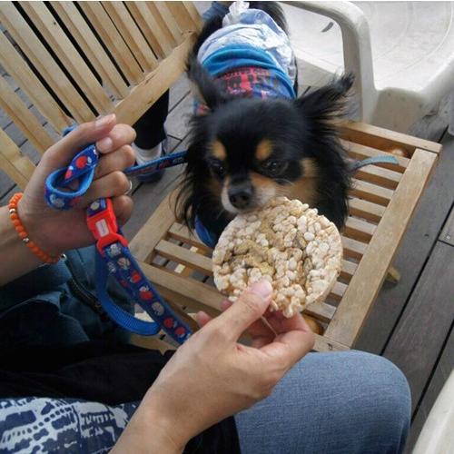 ペットも喜ぶ『減塩・玄米ポンせんべい(イリコ)』|morie|04