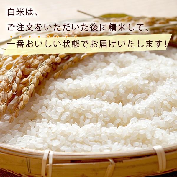 低農薬 キヌヒカリ 5kg 令和2年産 白米 100%有機肥料 特別栽培米 1等米 滋賀県環境こだわり米|morikawa-noujou|02