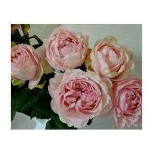 18 NEW バラ苗 エレガントドレス2〜3号 切り花品種接ぎ木 オリジナル 購入前に下記の重大なコツなどを読んでください 最新