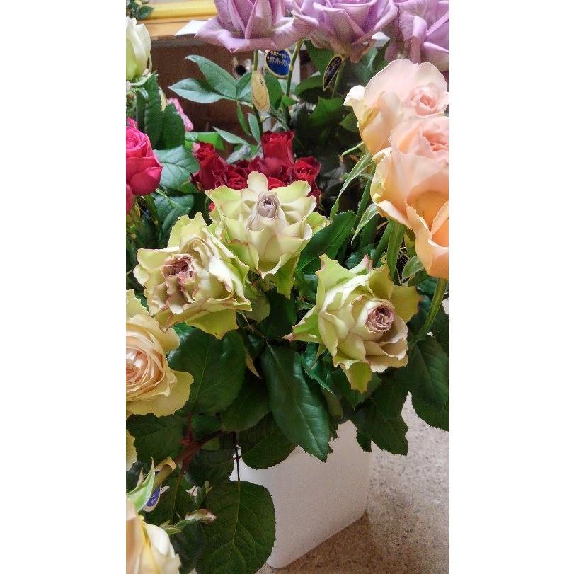 18 バースデー 記念日 ギフト 新作アイテム毎日更新 贈物 お勧め 通販 NEW バラ苗 切り花品種接ぎ木 ラピスベール ラピスヴェール 2〜3号 購入前に下記の重大なコツなどを読んでください