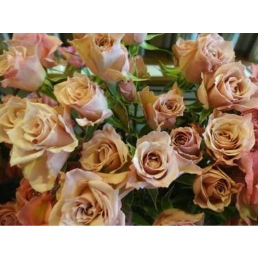 注目ブランド 18 NEW 保障 バラ苗 SPヘスティア2〜3号 購入前に下記の重大なコツなどを読んでください 切り花品種接ぎ木