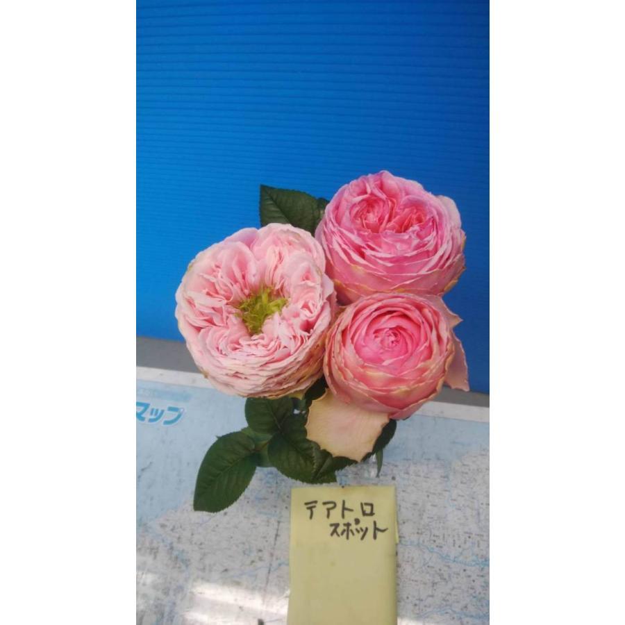 新品 20 NEW 保障 バラ苗 切り花品種接ぎ木 テアトロ2〜3号 購入前に下記の重大なコツなどを読んでください