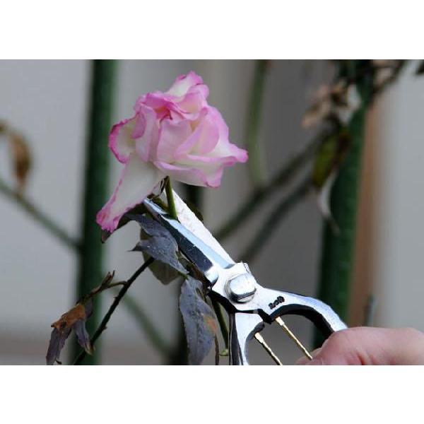 花つくり 花切鋏 200mm