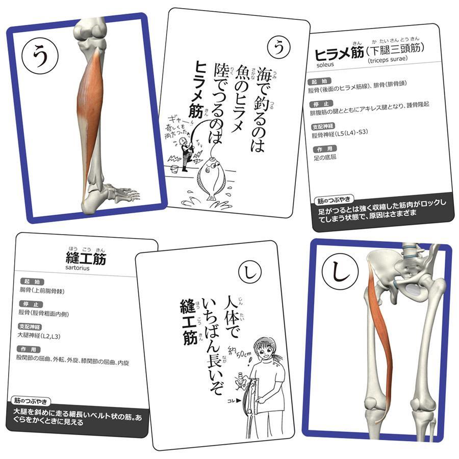 【セットでお得】筋肉かるた&骨かるた特別セット muscle 02