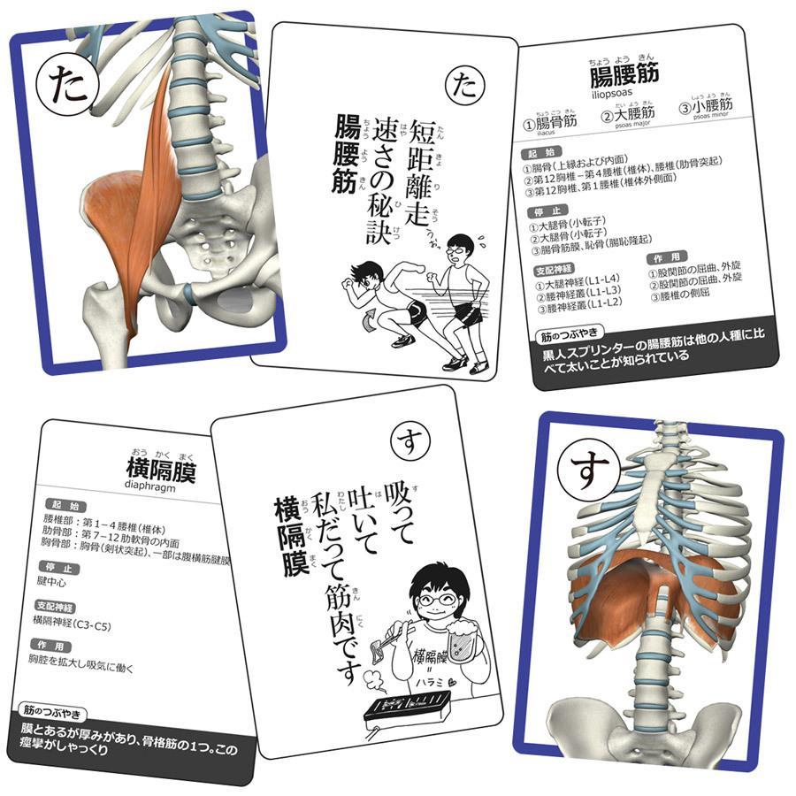 【セットでお得】筋肉かるた&骨かるた特別セット muscle 03