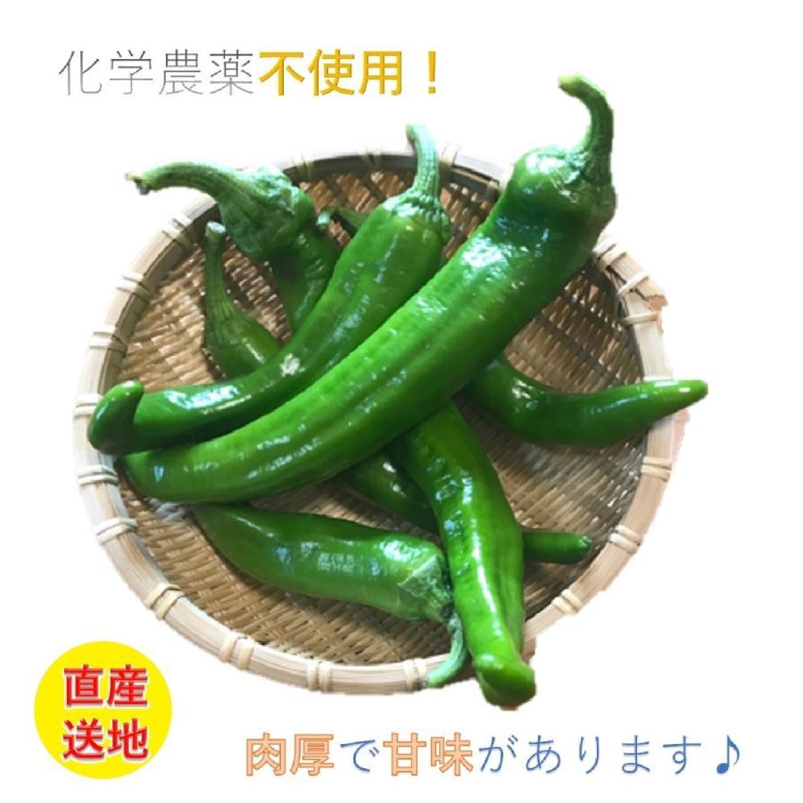 万願寺とうがらし(青) 500g my-cs-kyoyasai-pj