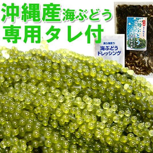 海ぶどう沖縄産100g 天皇杯受賞(クビレヅタ:海水入り海ブドウ) うみぶどう のタレ付 送料無料