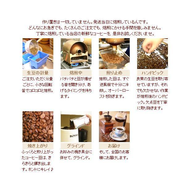 僅少品 インドネシア コピ・ルアック(焙煎豆100g) 焙煎したて|nanbucoffee|07