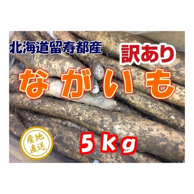 長芋 ながいも 北海道 在庫あり 留寿都産 5kg 訳あり 5%OFF
