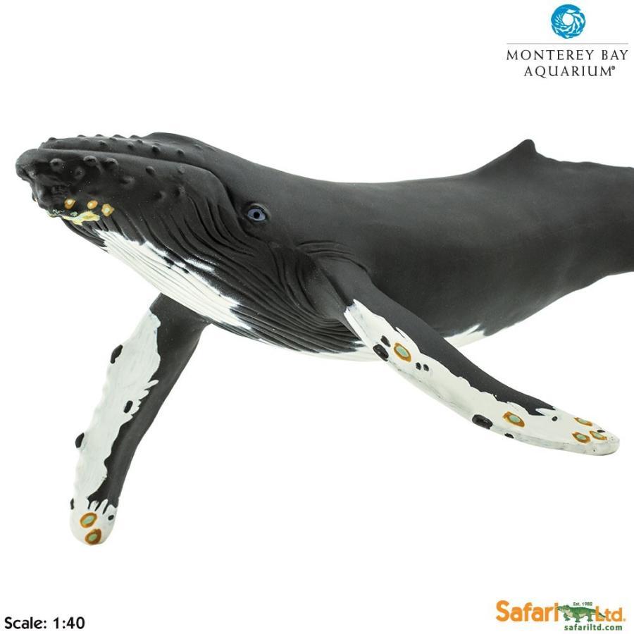 サファリ MB ザトウクジラ フィギュア モントレーベイ・アクアリウム監修モデル 210002