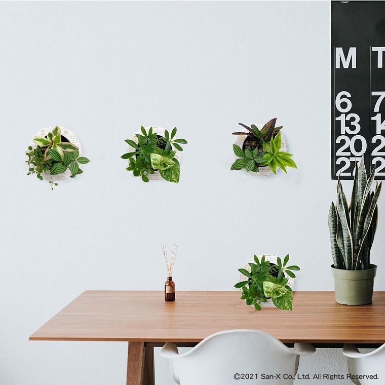 すみっコぐらし ミドリエデザイン 観葉植物 植物 壁掛け植物 本物 土を使わない パフカル苗 交換苗 かわいい 癒やし セットモデル3苗 ミドリエ給水ボトル|ndc1shop|13