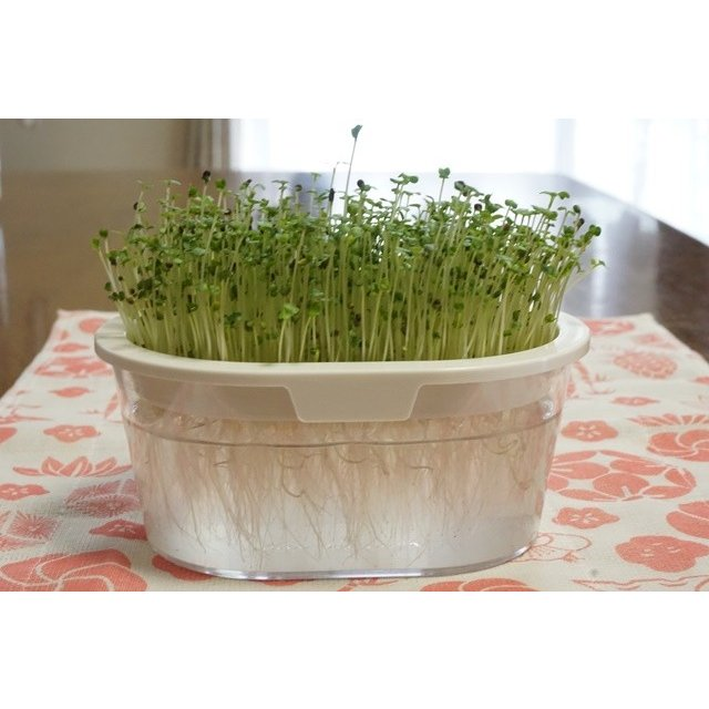 スプラウト 種 ブロッコリー 有機種子 固定種 小袋|nicoco|04