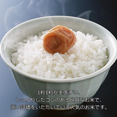コシヒカリ 1キロ 新潟米 1kg  令和3年産 お米 新潟産 産地直送 米 コメ niigata-gourmet 04