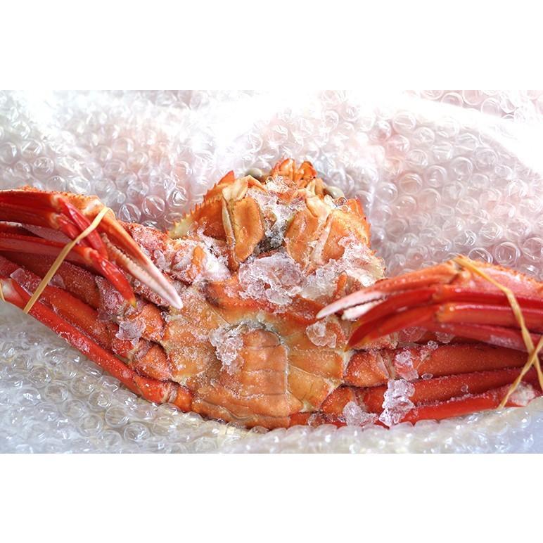 濃厚な旨味!日本海鮮魚センターの「ゆで紅ズワイガニ」 3尾(約1.5kg)/蟹 かに ずわいがに/御歳暮にも!ギフトにも!/のし無料/送料無料|niigata-shop|02