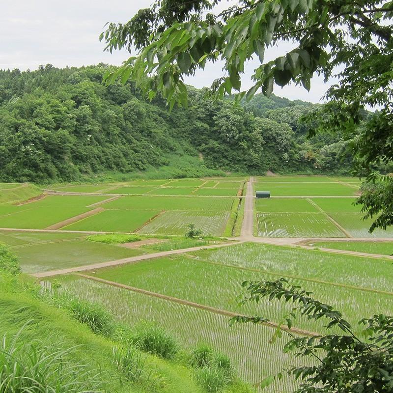 【お中元・贈り物に】新潟の米3種食べ比べ900g4個ギフトセット niigatanokome 06