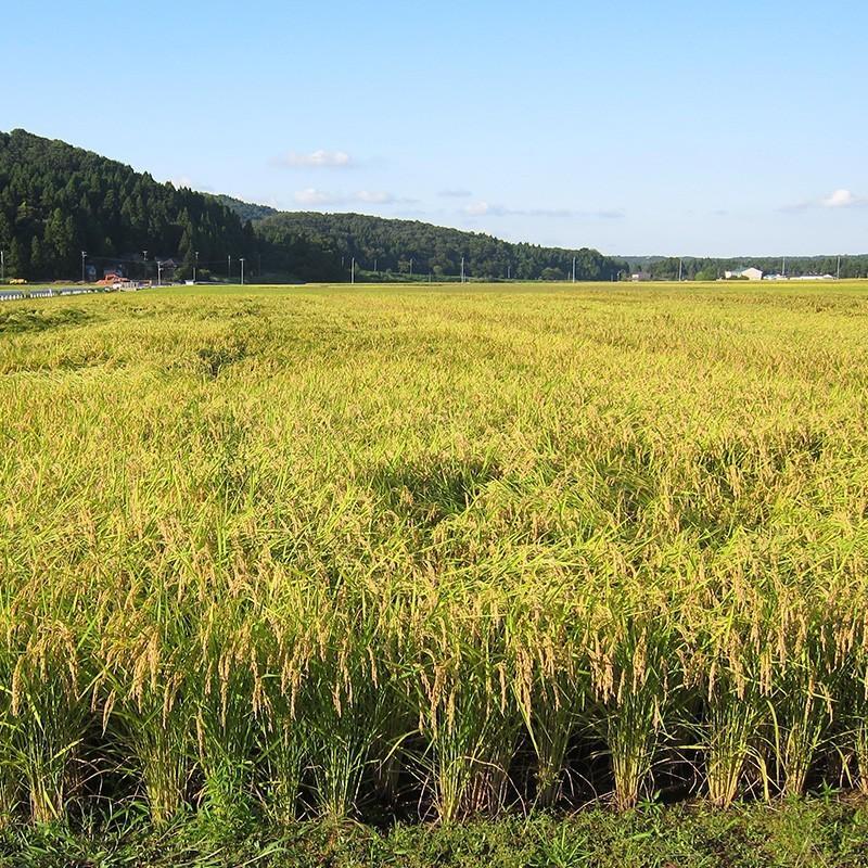 【お中元・贈り物に】新潟の米3種食べ比べ900g4個ギフトセット niigatanokome 09