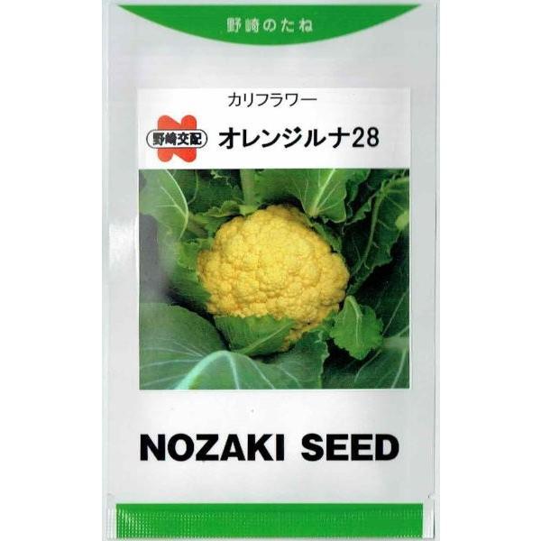ランキング総合1位 野崎採種場 カリフラワー オレンジルナ28 郵送対応 コート種子約70粒 セール特価