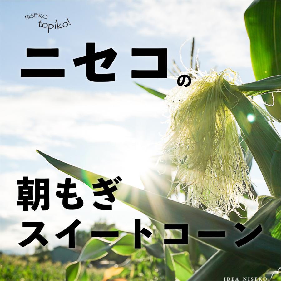 送料込み 北海道ニセコ産 6本 朝採り農家直送スイートコーン メーカー在庫限り品 買取