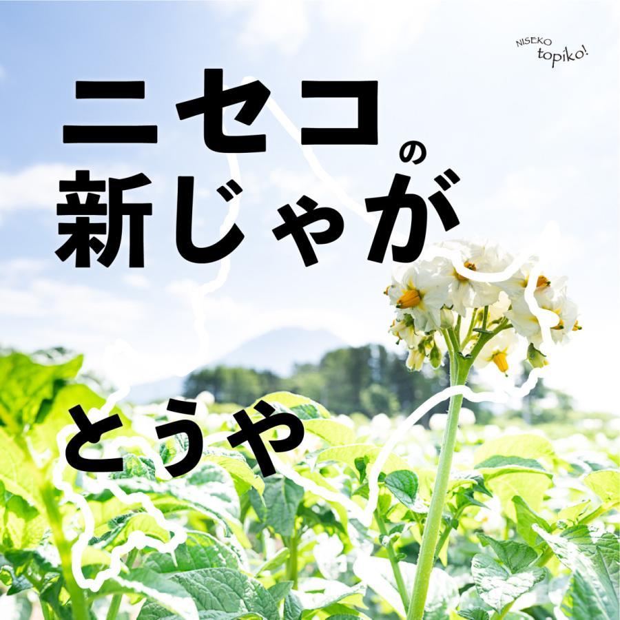 2021北海道の新じゃが 全品最安値に挑戦 ◆セール特価品◆ とうや サイズ混合2kg ニセコ産 送料込み