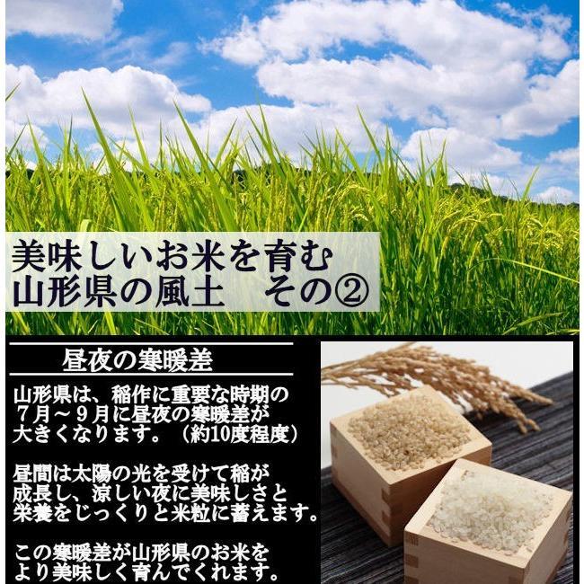 【新米】特別栽培米はえぬき岩魚米 (令和3年産)玄米 5kg nishiduka-farm 05