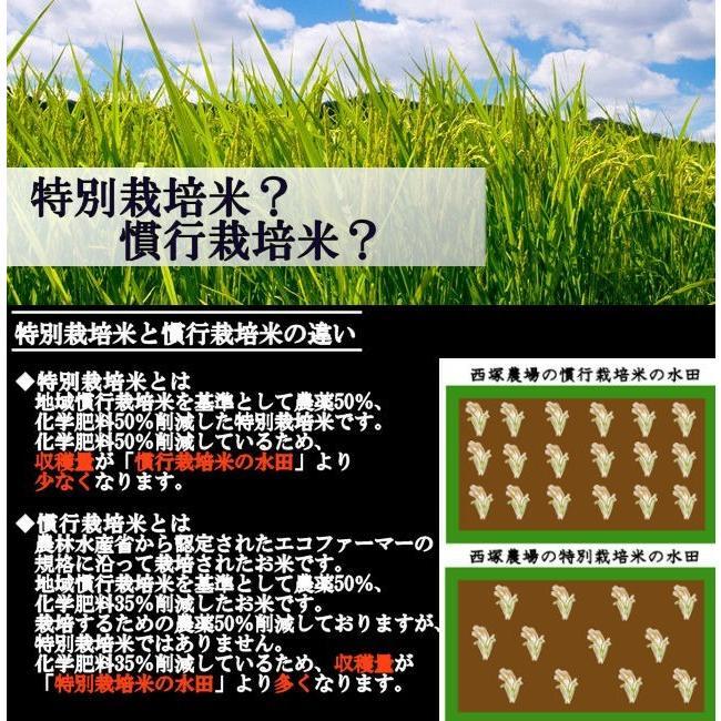 【新米】特別栽培米はえぬき岩魚米 (令和3年産)玄米 5kg nishiduka-farm 07