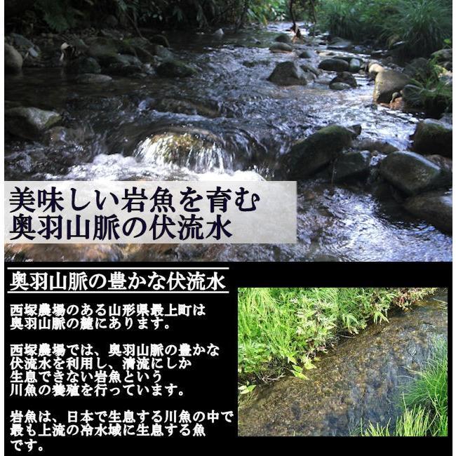 岩魚 10匹|nishiduka-farm|02