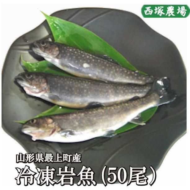 岩魚 50匹 nishiduka-farm