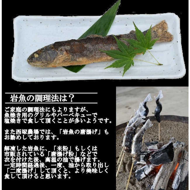 岩魚 50匹 nishiduka-farm 04