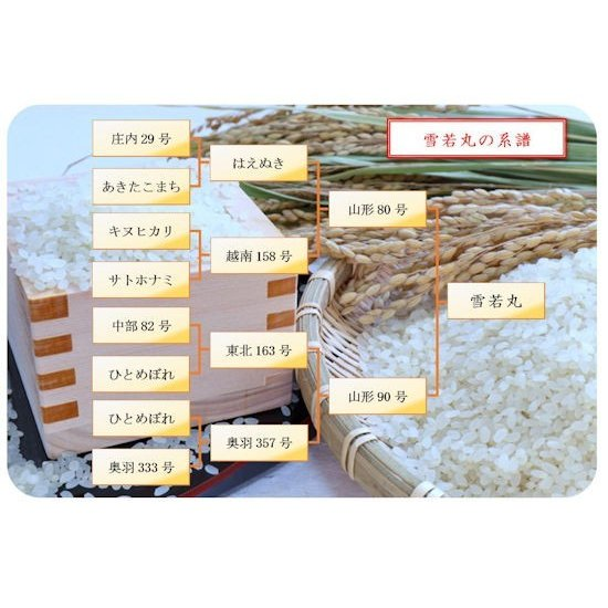 【新米】雪若丸 (令和3年産)玄米 20kg nishiduka-farm 05
