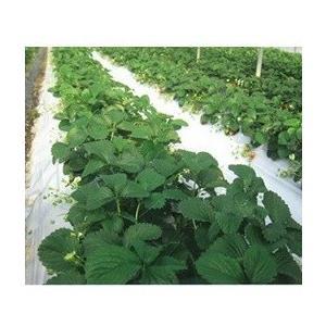 農業用マルチシート ムシャット (原反) 厚さ0.025mmX幅135cmX長さ200m