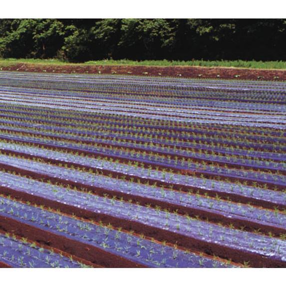 農業用マルチシート 黒ホールマルチ 幅95cm×長さ200m×孔60mm 規格9245 6本セット