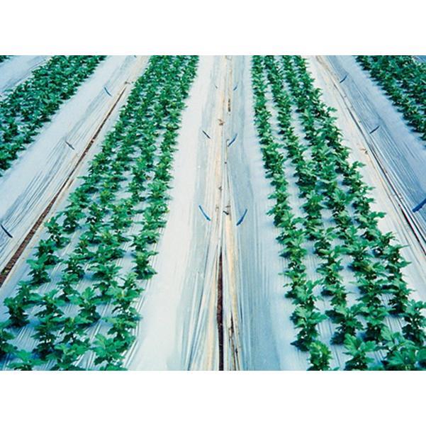 農業用マルチシート 防虫シルバー 長さ200m×厚さ0.023mm×幅135cm 2本セット