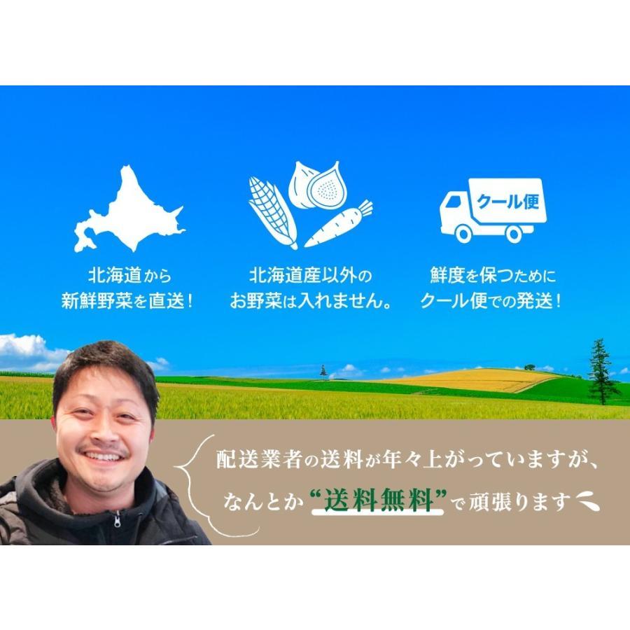 北海道産 野菜セット 旬の新鮮お野菜詰め合わせ 9品種以上 100サイズ 調理しやすい常備野菜がメインのつめあわせ|north-on-table|09