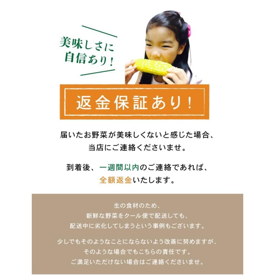 北海道産 野菜セット 旬の新鮮お野菜詰め合わせ 9品種以上 100サイズ 調理しやすい常備野菜がメインのつめあわせ|north-on-table|10