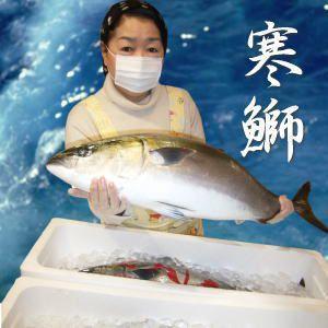 【送料無料】能登半島 豊漁のお陰で最安値に挑戦中!天然寒ぶり1本(6·7kg)