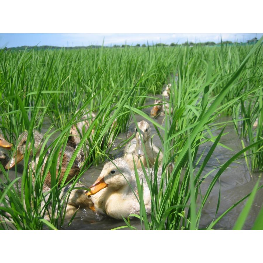 JAS有機あいがも栽培米(玄米)2kg【新潟県胎内産】|nousan|02